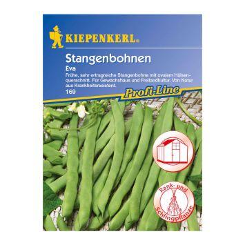 Stangenbohnen 'Eva'