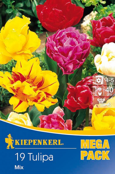Tulpen 'Gefüllte Tulpen' - Mischung