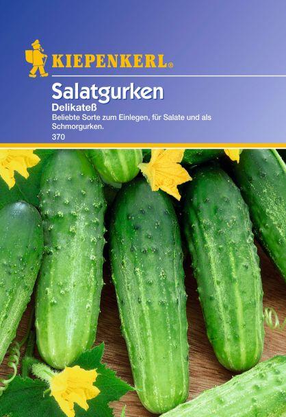 Gurken (Salatgurken) 'Delikateß'