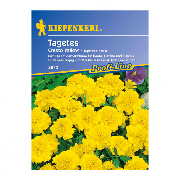 Tagetes 'Cresto Yellow'