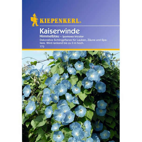 Kaiserwinde 'Himmelblau'