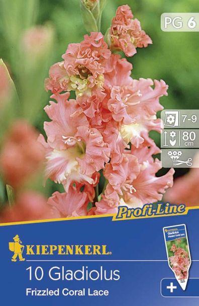 Gladiolen Fr. Coral Lace - ProfiLine