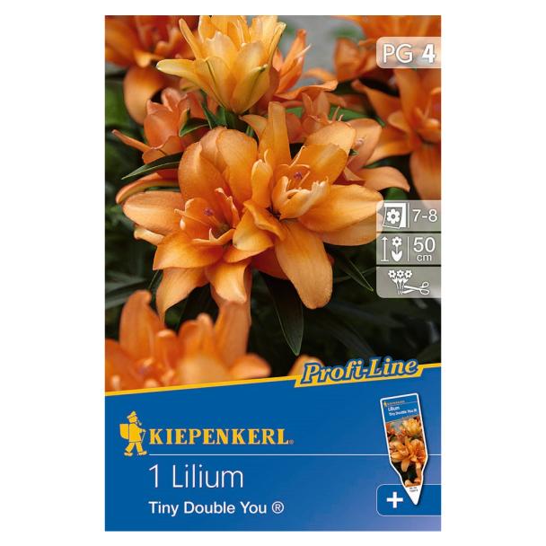 Profi-Line Lilie Tiny Double You