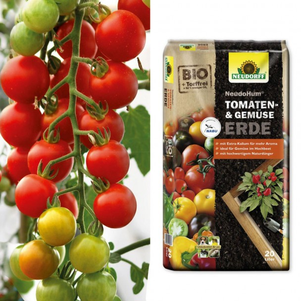 Rote Cherry-Tomate 'CherryLady' F1 + Erde (Sparangebot)