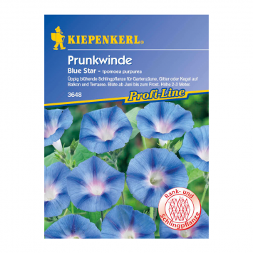 Prunkwinde 'Blue Star'