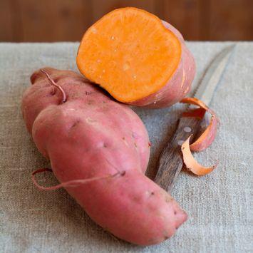 Süßkartoffel 'Erato Orange'