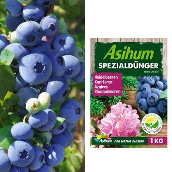Spar-Preis: 2 x Trauben-Heidelbeeren 'Blue Berry®' + 1 kg Asihum Spezialdünger