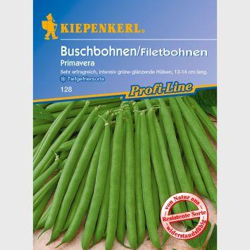 Buschbohnen / Filetbohnen 'Primavera'
