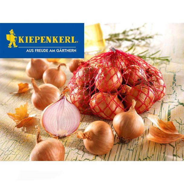 Steckzwiebeln Rote Schalotten Sante 500 g (100 g/€ 0,60)