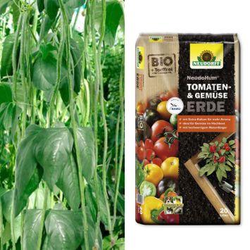 Sparangebot: 2 x 'Meterbohnen' - fadenlose Stangenbohne + 1 x NeudoHum® Tomaten- und Gemüseerde