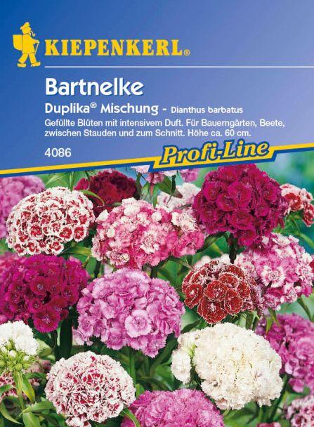 Bartnelken 'Duplika® Mischung'