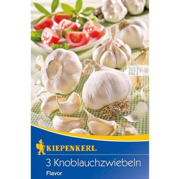 Knoblauch 'Flavor'