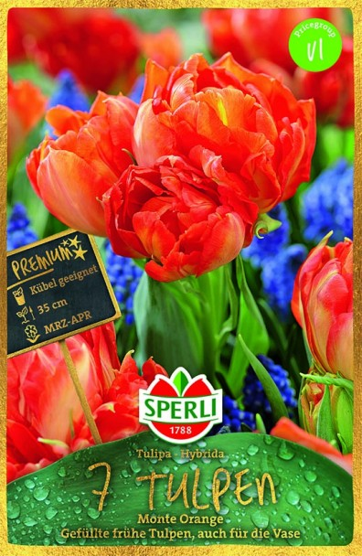 Sperli Premium Tulpen Monte Orange