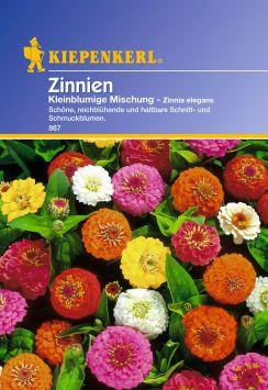 'Zinnien' Kleinblumige Mischung