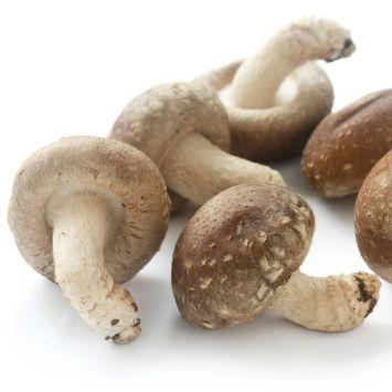 'Shiitake' Pilz-Fertigkultur