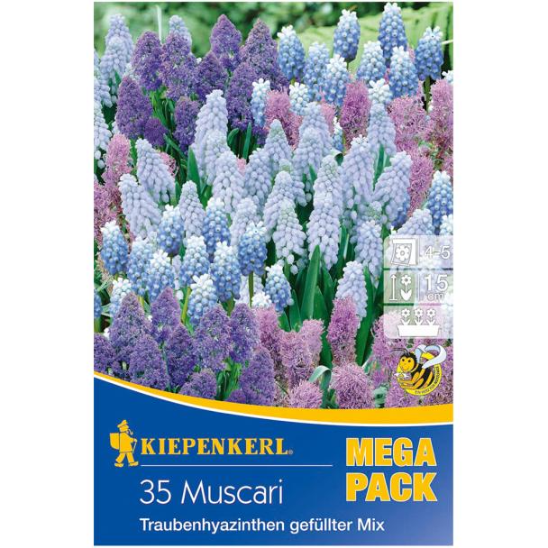 Mega-Pack Muscari-Mischung mit gefüllten Sorten