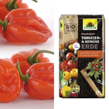 Setpreis: 2 x Indian Fire – Indischer Chili + 1 x NeudoHum® Tomaten- und Gemüseerde