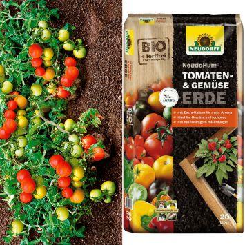 Tomate Botoma + Erde (Sparangebot)
