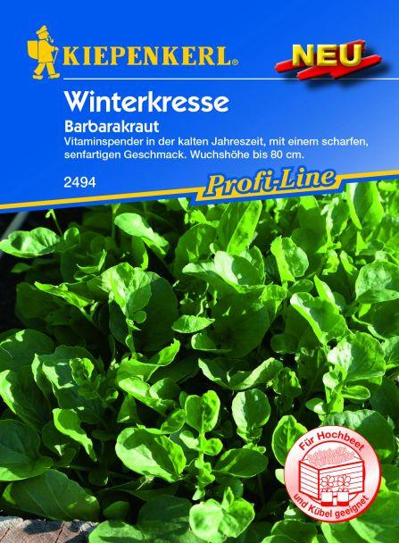 Winterkresse (Barbarakraut)