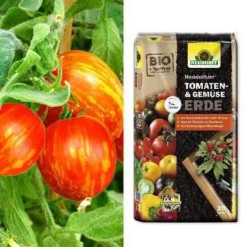 Setpreis: 2 Busch-Tomaten 'Lucky Queen' + Erde