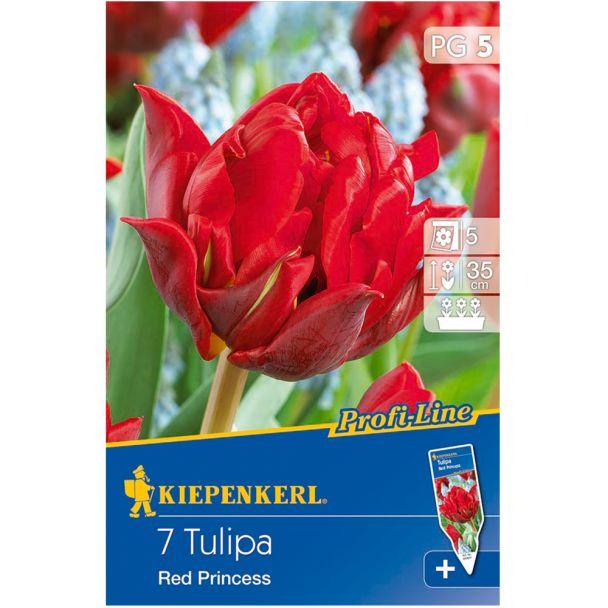 Gefüllte späte Tulpe `Red Princess` - Blumenzwiebel