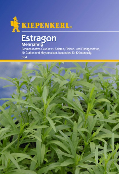 Estragon 'Mehrjährig'