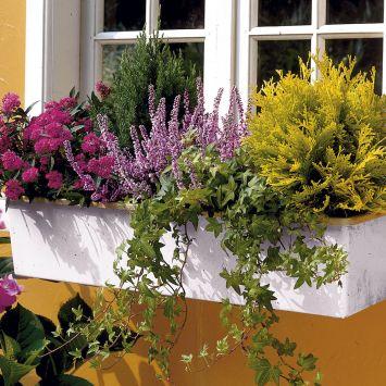 Balkon-Sortiment 'Allgäu'
