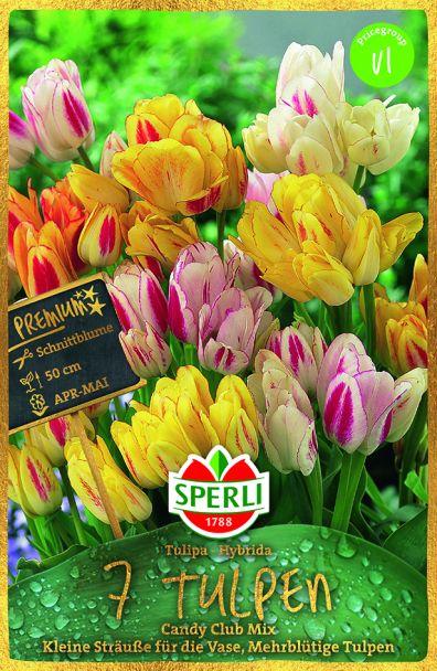 Mehrblütige Tulpen 'Candy Club' Mix