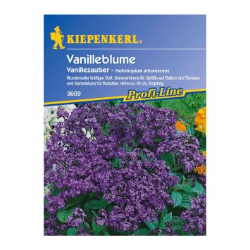 Vanilleblume 'Vanillezauber'