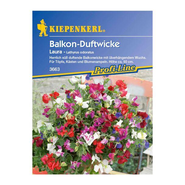 Balkon-Duftwicke 'Laura'