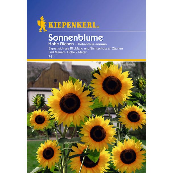 Sonnenblume 'Hohe Riesen'