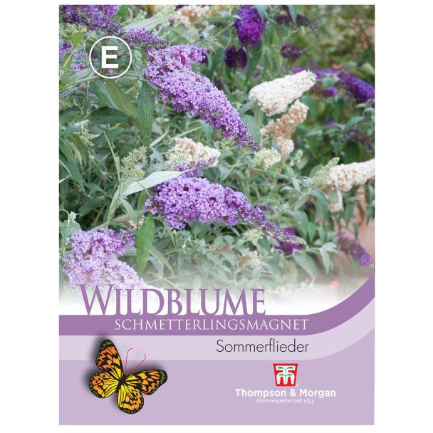 Wildblume Schmetterlingsmagnet (Sommerflieder)