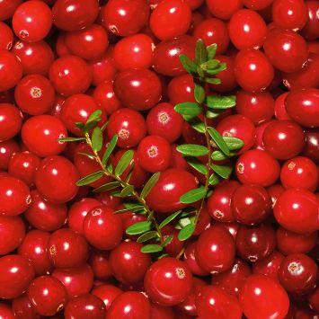 Fruchtender Bodendecker Cranberry