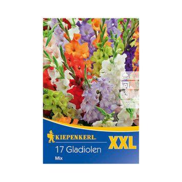 Gladiolen XXL Mix