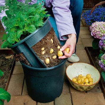 'PotatoPot®' - Für die Kartoffelernte im Topf