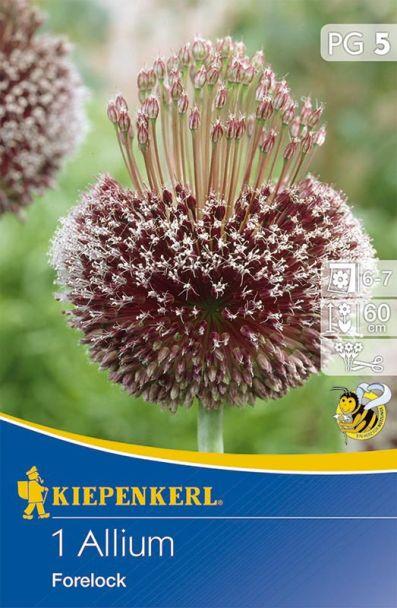 Zierlauch Allium 'Forelock'