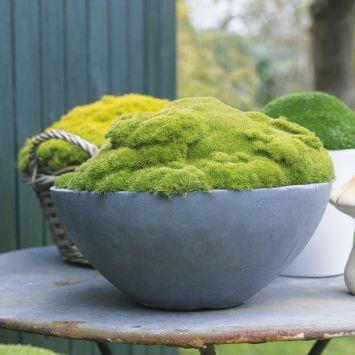 Match Moss 'Pine Green'