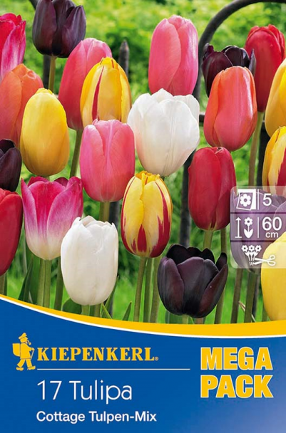 Tulpen 'Cottage Tulpen Mix'