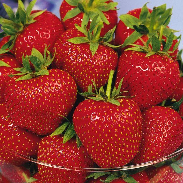 Aroma-Erdbeere 'Korona', mittelfrüh