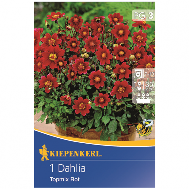 Dahlie Topmix Rot