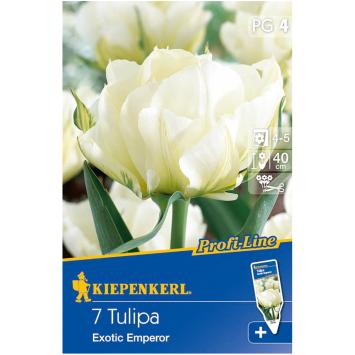Fosteriana-Tulpen 'Exotic Emperor'