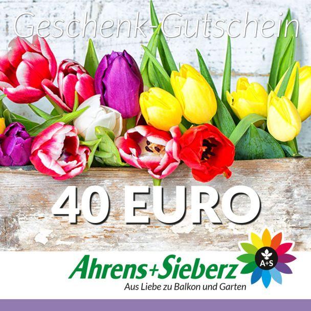 Geschenk-Gutschein, Wert 40 Euro Tulpen