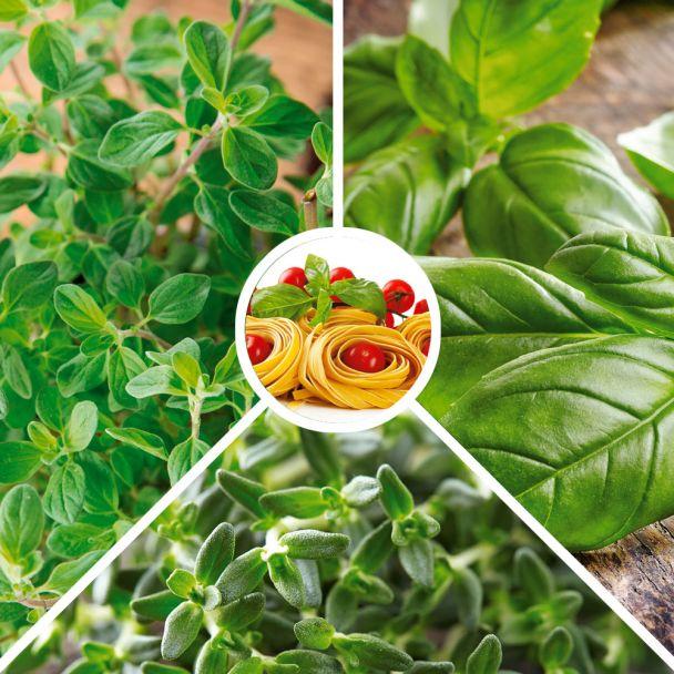 Kräuter-Sortiment: 'Pasta'