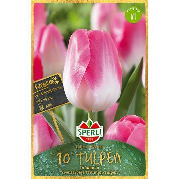 Sperli Premium Triumph Tulpen Innuendo