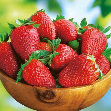 Erdbeere 'Sonata', Setzlinge
