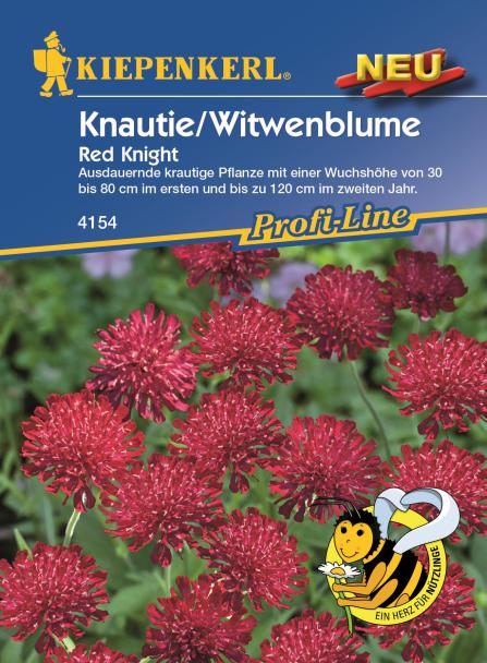 Knautie/Witwenblume Red Knight