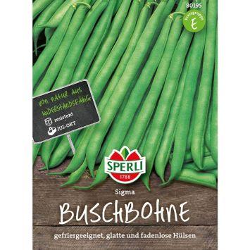 Buschbohne 'Sigma'