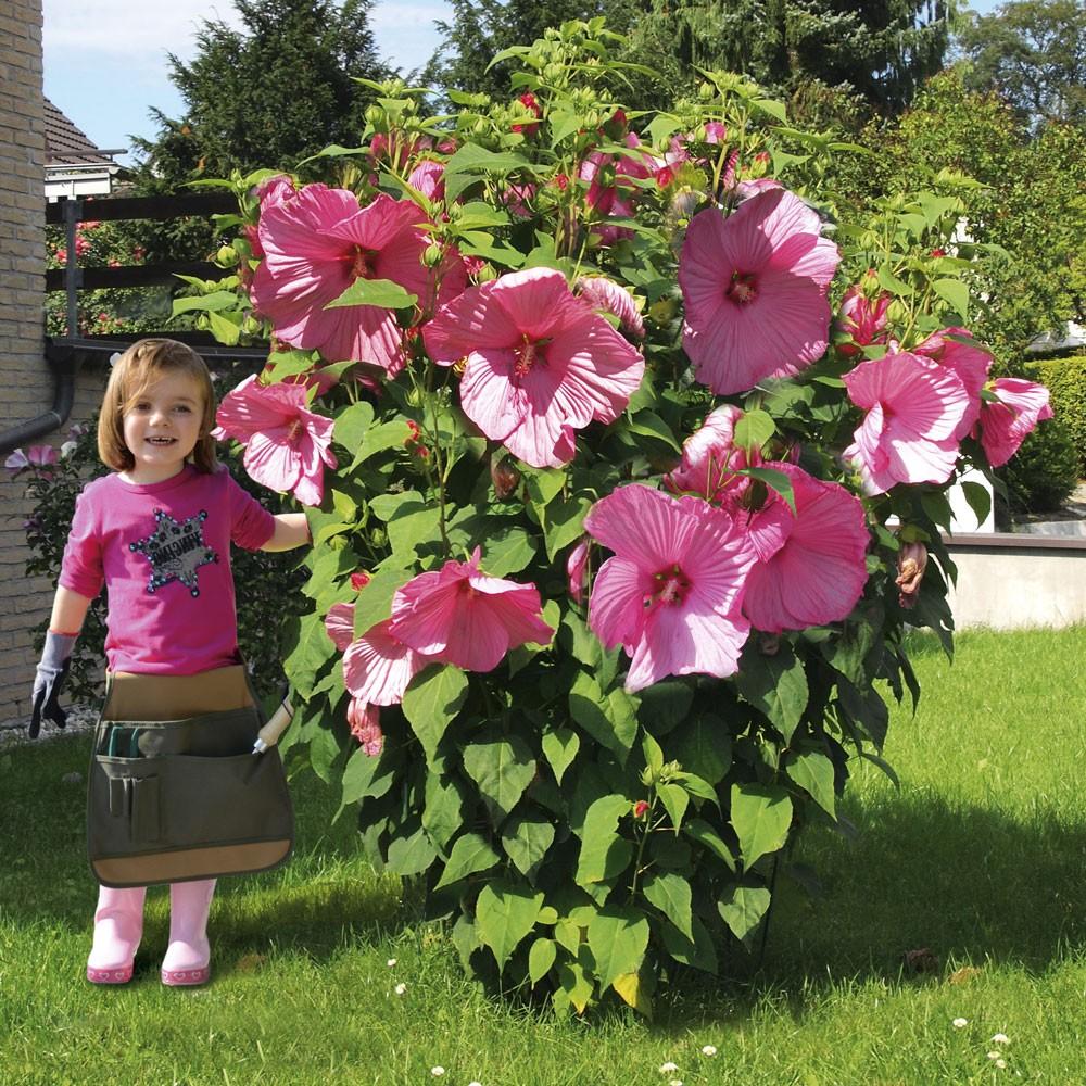 Hibiskus Winterhart Große Blüten - Mellowcement