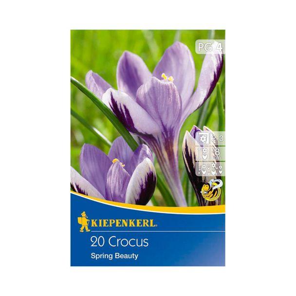Botanische Krokusse 'Spring Beauty'