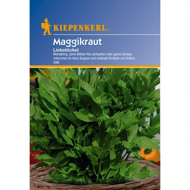 Maggikraut 'Liebstöckel'